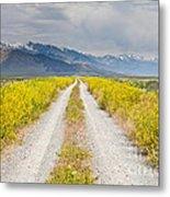 Ruby Mountains Wildflower Road Metal Print by Sheri Van Wert