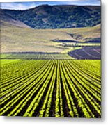 Rural Landscape With Planted Crops Metal Print by David Buffington