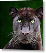 Saber Metal Print by Big Cat Rescue