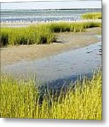 Salt Marsh Habitat With Flock Of Birds Metal Print by Tim Laman