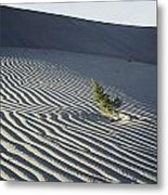 Sand Dunes, Death Valley, California Metal Print by Marc Moritsch