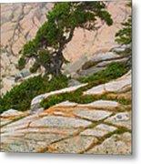 Schoodic Cliffs Metal Print by Brent L Ander