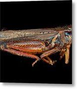 Science - Entomology - The Specimin Metal Print by Mike Savad