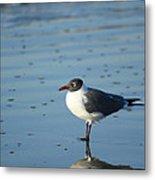 Sea Bird Reflection Metal Print by Pat Exum