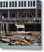 Sea Lions At Pier 39 San Francisco California . 7d14272 Metal Print by Wingsdomain Art and Photography