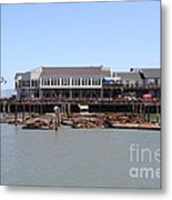 Sea Lions At Pier 39 San Francisco California . 7d14273 Metal Print by Wingsdomain Art and Photography
