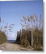 Sea Oats Line The Path Metal Print by Taylor S. Kennedy