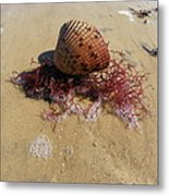 Sea Shell Seaweed An Sand 1 Metal Print by Sheri McLeroy