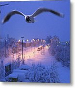 Seagull At Winter Metal Print by Nafets Nuarb