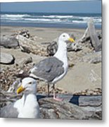 Seagull Bird Art Prints Coastal Beach Bandon Metal Print by Baslee Troutman
