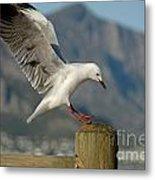 Seagull Landing On Pole Metal Print by Sami Sarkis