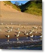 Seagulls At The Bowl Metal Print by Michelle Calkins