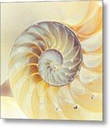 Seashell. Light Version Metal Print by Jenny Rainbow