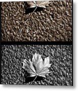 Seasons Of Change Metal Print by Luke Moore