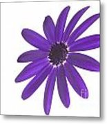 Senetti Deep Blue Head Metal Print by Richard Thomas