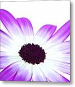 Senetti Magenta Bi-colour Metal Print by Richard Thomas