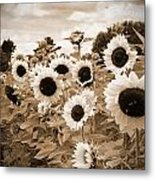 Sepia Sunflower Field Metal Print by Debbra Obertanec