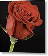 Sharp Red Rose On Black Metal Print by M K  Miller