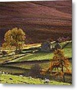 Sheep On A Hill, North Yorkshire Metal Print by John Short