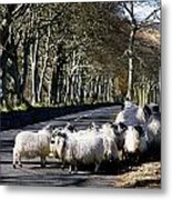 Sheep On The Road, Torr Head, Co Metal Print by The Irish Image Collection