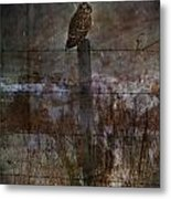 Short Eared Owl Metal Print by Jerry Cordeiro