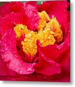 Show Off Metal Print by Rich Franco
