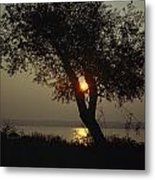 Silhouette Of Willow Tree At Sunset Metal Print by Al Petteway