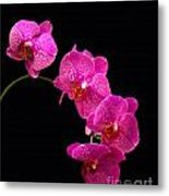 Simply Beautiful Purple Orchids Metal Print by Michael Waters