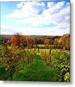 Six Miles Creek Vineyard Metal Print by Paul Ge