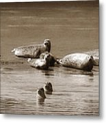 Smile Pretty For The Camera Metal Print by Donna Blackhall