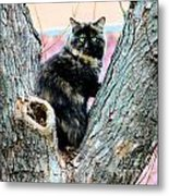 Snickers Caught In The Act Metal Print by Cheryl Poland
