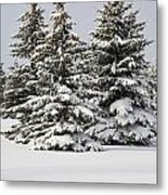 Snow Covered Evergreen Trees Calgary Metal Print by Michael Interisano