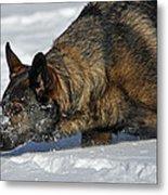 Snow Dog Metal Print by Karol Livote