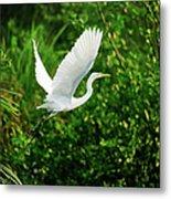 Snowy Egret Bird Metal Print by Shahnewaz Karim