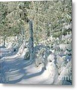 Snowy Footpath In Winter Wonderland Metal Print by Heiko Koehrer-Wagner
