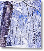 Snowy Path Metal Print by Rob Travis
