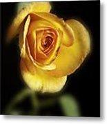Soft Yellow Rose On Black Metal Print by M K  Miller