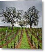 Sonoma County Vineyard Metal Print by Joan McDaniel