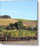 Sonoma Vineyards - Sonoma California - 5d19307 Metal Print by Wingsdomain Art and Photography
