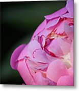 Sorbet Peony Metal Print by Ruthie Lombardi