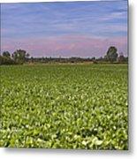 Soybean Field Metal Print by Paolo Negri