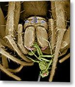 Spider Eating A Fly, Sem Metal Print by Volker Steger