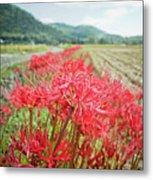 Spider Lily Metal Print by Yoshika Sakai