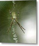 Spider Metal Print by Odon Czintos