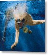Splashdown 2 Metal Print by Jill Reger