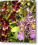 Spotted Flowers Metal Print by Silvie Kendall