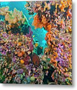 Spotted Goldring Surgeonfish And Coral Metal Print by Beverly Factor