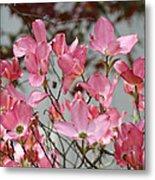 Spring Dogwood Tree Flowers Art Prints Pink Flowering Tree Metal Print by Baslee Troutman