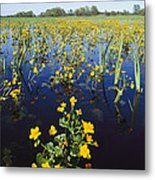 Spring Flood Plains With Wildflowers Metal Print by Norbert Rosing