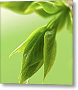 Spring Green Leaves Metal Print by Elena Elisseeva